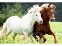 spiegelburg boxpuzzle auf der weide pferdefreunde (72 teile)